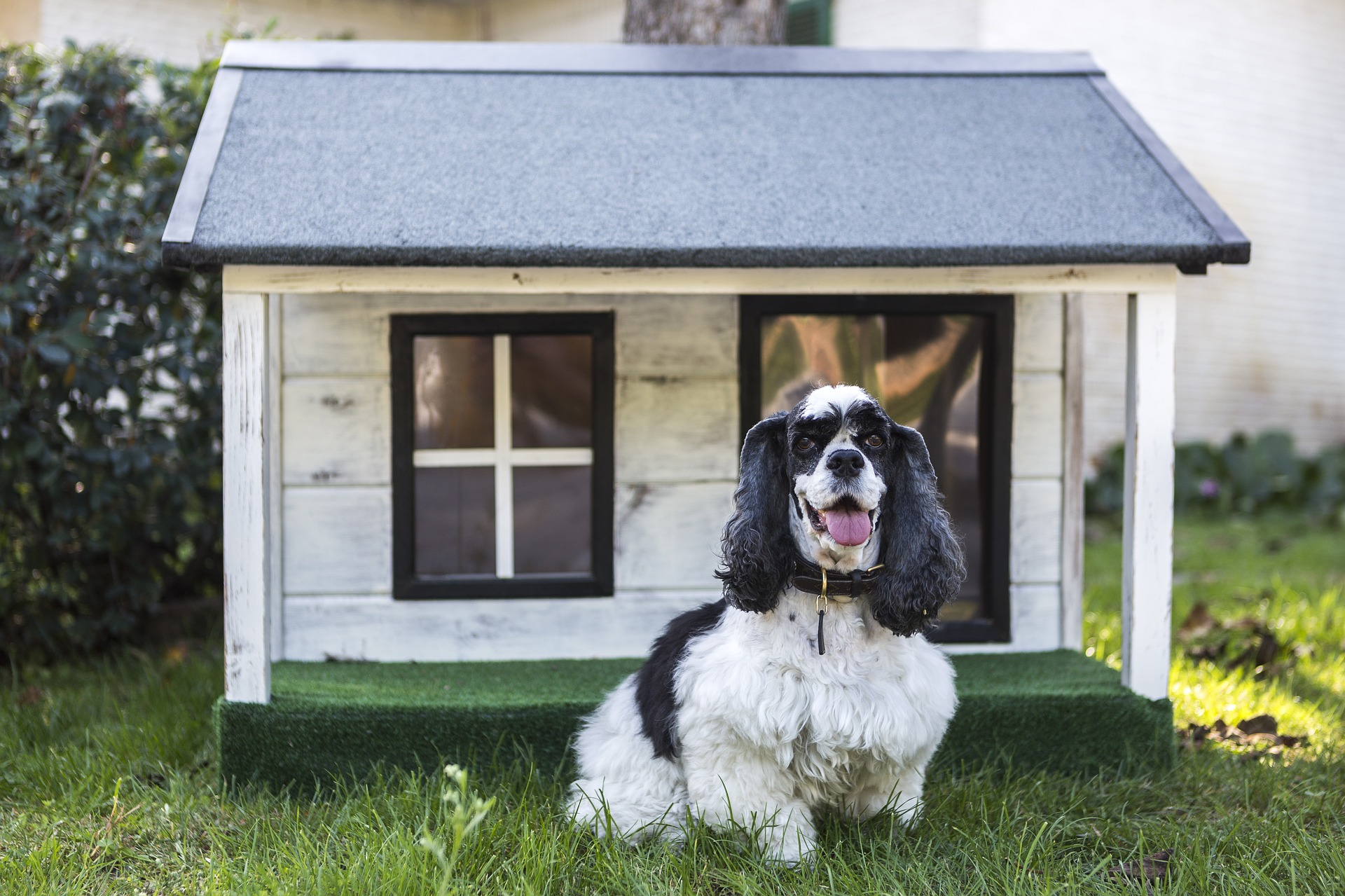kennels-for-pets-3821849_1920